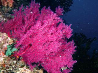 Sunshine Coast Divers Visit Vanuatu